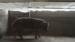 【微纪录】猪场生计:非洲猪瘟重创之后(下)