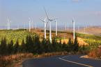 目标冲突下的新能源并网消纳问题何解
