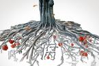 封面报道|内蒙古政法窝案风暴
