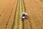 科迪华农业:中国农业现代化发展要打破数据壁垒