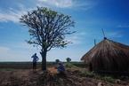 显影 到莫桑比克务农