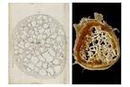 科学|列文虎克显微镜下的世界