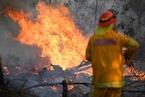 研究:气候变化令澳洲山火爆发可能性至少增30%