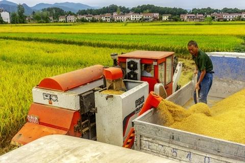 湖北:全省粮食库存充裕,不须跟风抢购