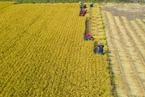 全球食品价格升至2月以来最高水平 谷物价格上涨明显