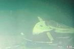 习近平就印尼海军潜艇失事沉没向印尼总统致慰问电