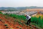 盘前必读:多项农地改革试点进入总结阶段