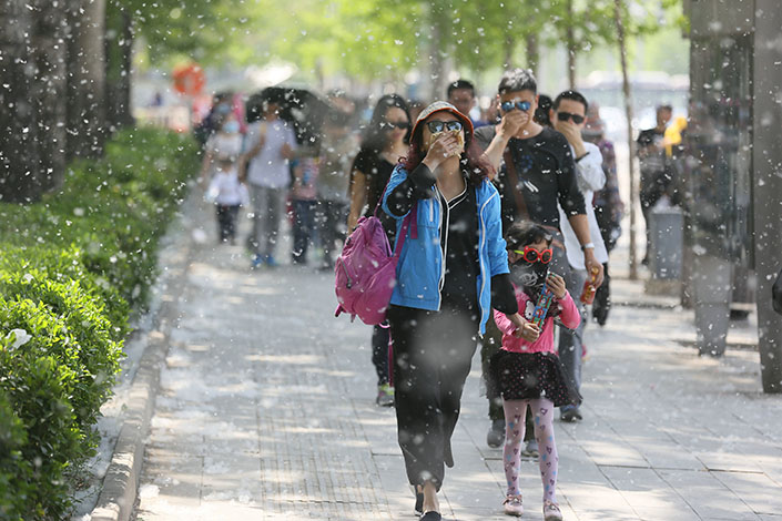 Residents walk through catkins falling from poplar trees in Wangfujing Street in Beijing, China, on April.8, 2017. Calls to remove the trees are mounting as exposure to their pollen can lead to skin rashes, allergies, coughing and other respiratory problems. Photo: Visual China