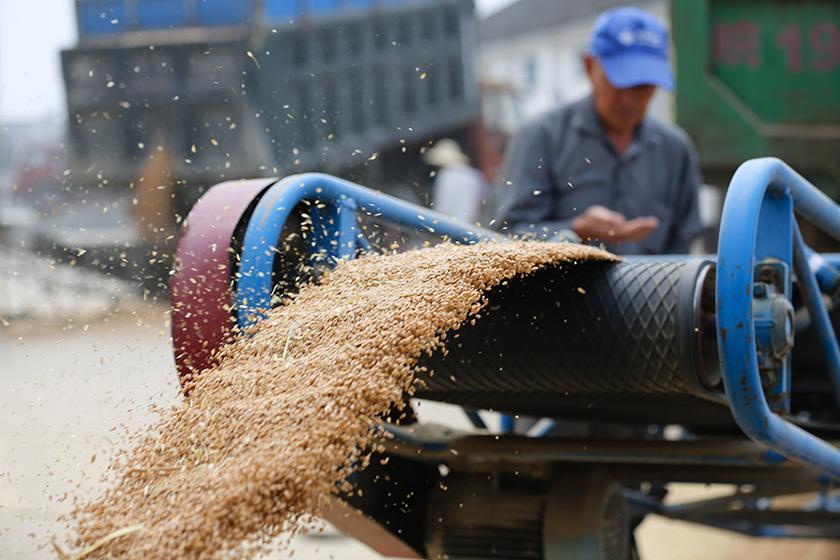 李克强主持召开国常会 部署进一步促进粮食生产稳定发展