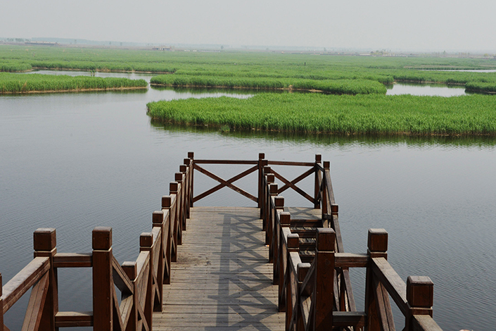 Tianjin city government officials have drawn criticism from the central Chinese government over the worsening of air and water pollution there. Above, the Qilihai Nature Reserve in Tianijn is seen in April 2014. Photo: Visual China