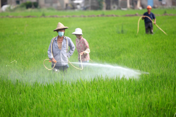 Farmers spray pesticide on their rice fields in Wenling, Zhejiang province, on June 27, 2016.
