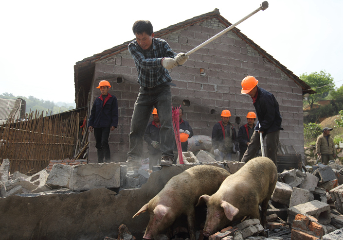 Inspectors with the Ministry of Environmental Protection uncovered more than 18,000 cases nationwide in which environmental laws were flouted during the latest round of inspections. Above, workers hired by a local township government in Zhuji, Zhejiang province, dismantle a pig farm in April 2014 as part of Zhuji's campaign to close unqualified livestock farms to reduce water pollution. Photo: IC