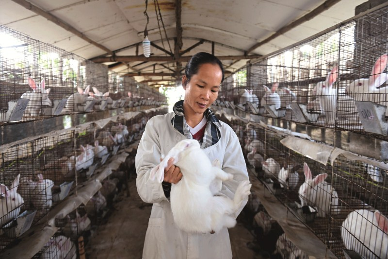 Farmers in China's southern Guangxi Zhuang autonomous region have used bank loans to establish a professional cooperative of farmers to raise rabbits. Photo: Visual China