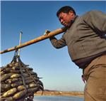农行淮安分行发放农户贷款1056万元,帮助农民扩大种植规模,农民朋友付出了辛劳,也收获了喜悦
