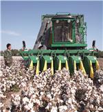 农行新疆兵团分行支持兵团大型机采棉