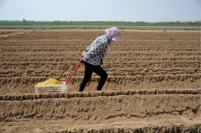 Rural land is the fall-back option for millions in China's countryside, who don't enjoy the same access to health insurance or pensions enjoyed by landless urban dwellers. Pictured is a rural woman working on a farm in Yongji, Shanxi province. Photo: Visual China