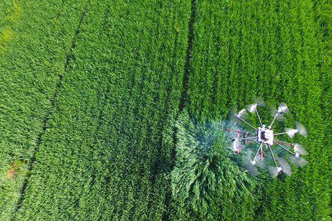 China plans to promote the application of drones in such areas as agriculture and emergency response. Above: A drone sprays pesticide on crops. Photo: Visual China