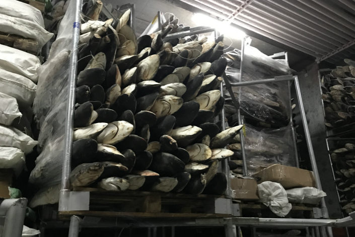 A heap of de-finned sharks stands in an aquatic products trading center on Sept. 13 in Fuzhou, East China's Fujian province. The sharks were caught a year ago by fishermen on a boat from East China's Shandong province, according the center's manager. Photo: Zhou Chen/Caixin