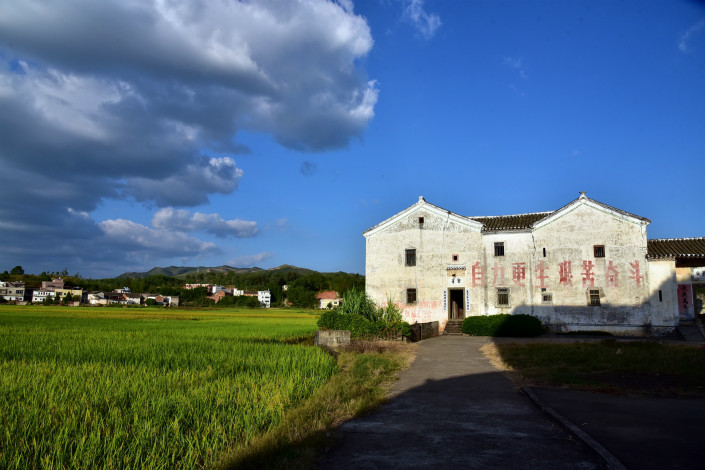 Rice fields in a rural part of Heyuan, South China's Guangdong province. Photo: VCG