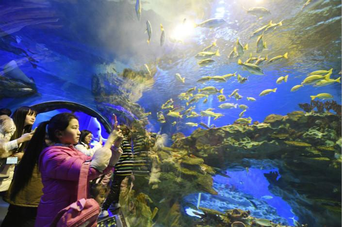 Visitors snap photos of the marine life at Shanghai Haichang Polar Ocean Park on Feb. 16. Photo: VCG