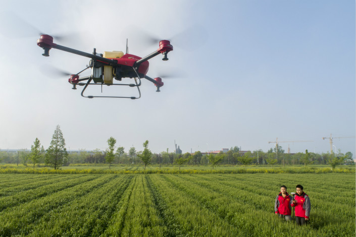 A drone sprays a wheat field with pesticide on Friday at an agricultural cooperative in eastern China's Jiangsu province. Photo: VCG