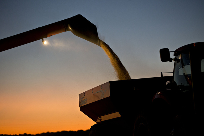 Soybeans are unloaded from a Case IH Agricultural Equipment Inc. combine harvester at dusk during harvest in Buda, Illinois, U.S., on Sept. 29, 2017. Photo: Bloomberg