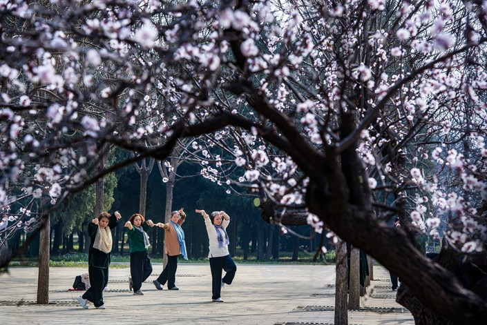 Elderly women dance while surrounded by apricot flowers at Beijing's Temple of Heaven park in Beijing on April 11. Photo: VCG