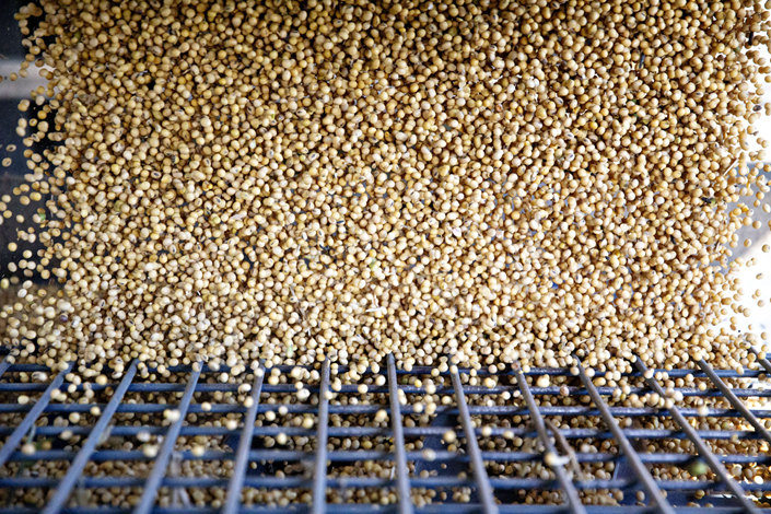 Soybeans at harvest. Photo: Bloomberg