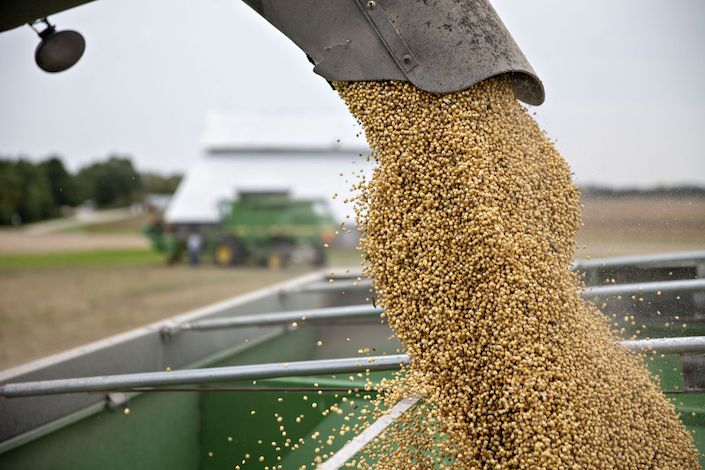 Soybeans are loaded into a grain cart during harvest. Photo: Bloomberg