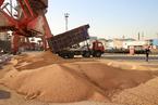 农业部新批五进口转基因品种 对美加大豆油菜影响大