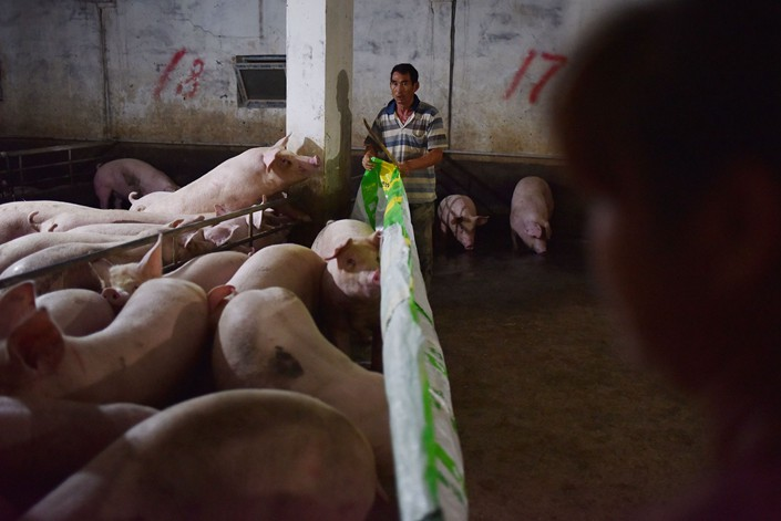 Workers tend pigs at a farm in Yiyang county, in Central China's Henan province, Aug. 10, 2018. Photo: VCG
