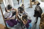 管好狗才能消除狂犬病 疾控中心主任拟提案