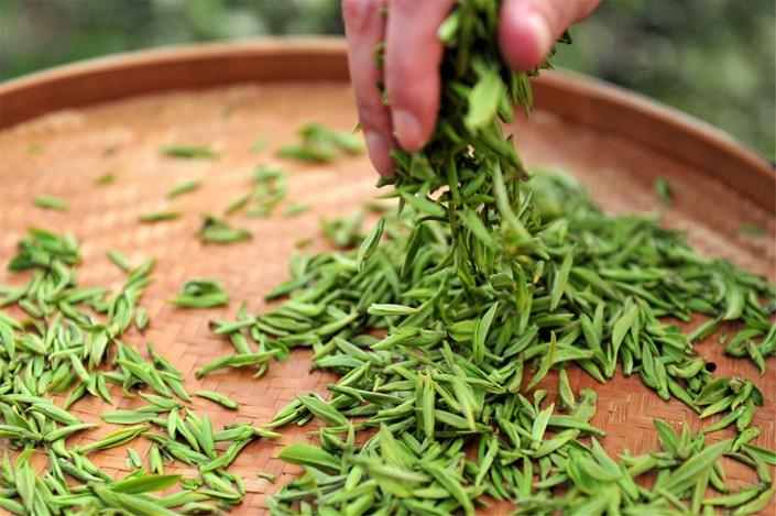 Tea buds in Wayaoping Village in Yichang City, Hubei, March 6, 2019. Photo: IC