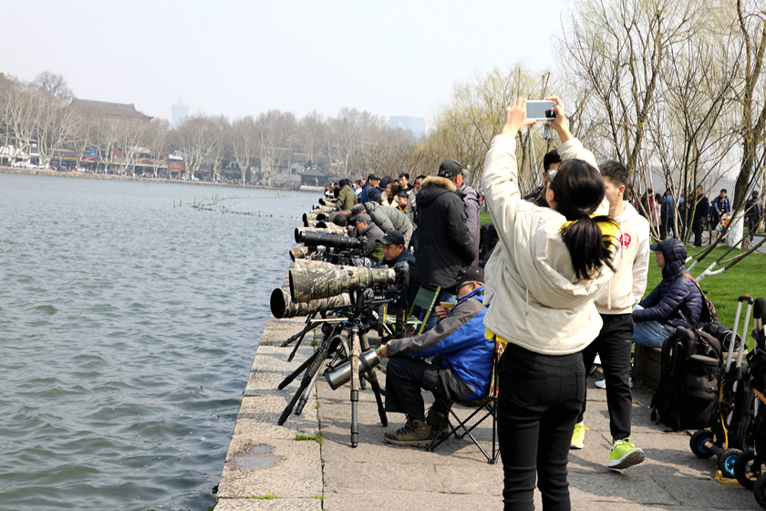 Gallery: Photographers Flock to Get Shots of Birds - Caixin