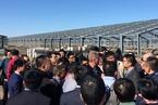 封面报道|探访非洲猪瘟最大爆发地 黑龙江明水猪场缘何沦陷