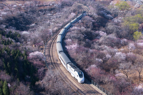 A train travels through a sea of blossoming peach and apricot trees near the Juyong Pass in Beijing on March 24. Photo: IC