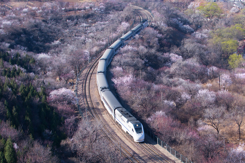 A train travels through a sea of blossoming peach and apricot trees near the Juyong Pass in Beijing on March 24. Photo: IC_Gallery: Peach Trees Blossom On Track Through Popular Spring Travel Spot