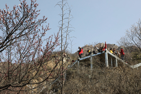 Visitors gather at an observation deck to view the first blossoms of spring, March 26. Photo: IC
