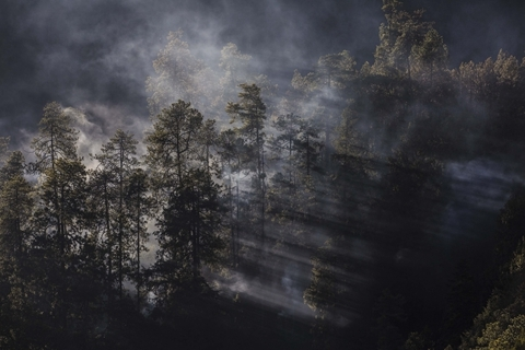Forest Fire in Sichuan Kills 26 Firefighters Sent to Put It