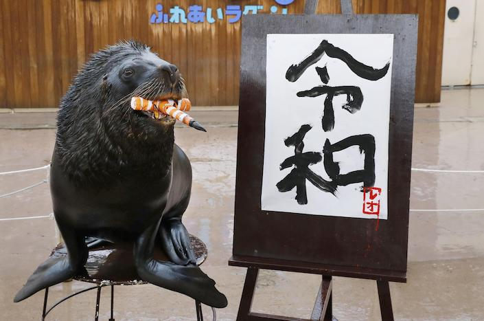 A South American sea lion holds a calligraphy brush in his mouth with which he wrote the kanji characters showing the name of Japan's new era, 'Reiwa,' at an aquarium in Yokohama, near Tokyo, on April 1, 2019. The new era, announced by the government earlier in the day, will begin May 1 when Crown Prince Naruhito will ascend the throne to succeed his father Emperor Akihito. Photo: VCG