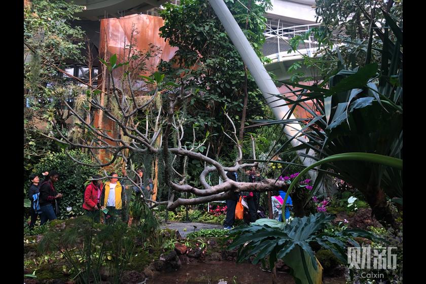 Gallery: Horticultural Extravaganza Gets Beijing Blooming