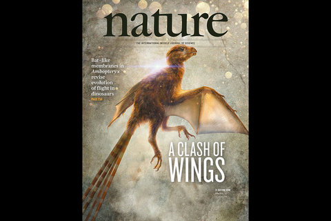 The cover of famed scientific journal Nature shows an artist's reconstruction of Ambopteryx longibrachium. Photo: Institute of Vertebrate Paleontology and Paleoanthropology