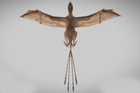 A 3D reconstruction of Ambopteryx longibrachium, which was discovered by paleontologists from China's Institute of Vertebrate Paleontology and Paleoanthropology in northeastern China. The dinosaur was 32 centimeters in length and weighed 306 grams (10.8 ounces). Photo: Wang Min/Institute of Vertebrate Paleontology and Paleoanthropology