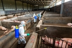 农业部正式推行动物疫病分区防控 划分五大区