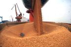 美国大豆对华出口暴跌 主产区种植进度见缓