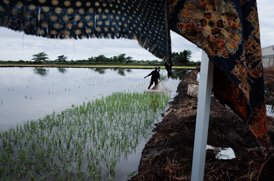 Opinion: Partnering With China Can Help Transform Africa's Agriculture