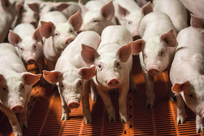 Prices in the EU, the top pork exporter, have fared better than in rivals due to a tighter market. Photo: Bloomberg