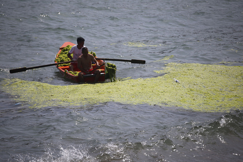Two people collect seaweed on June 27. Photo: VCG