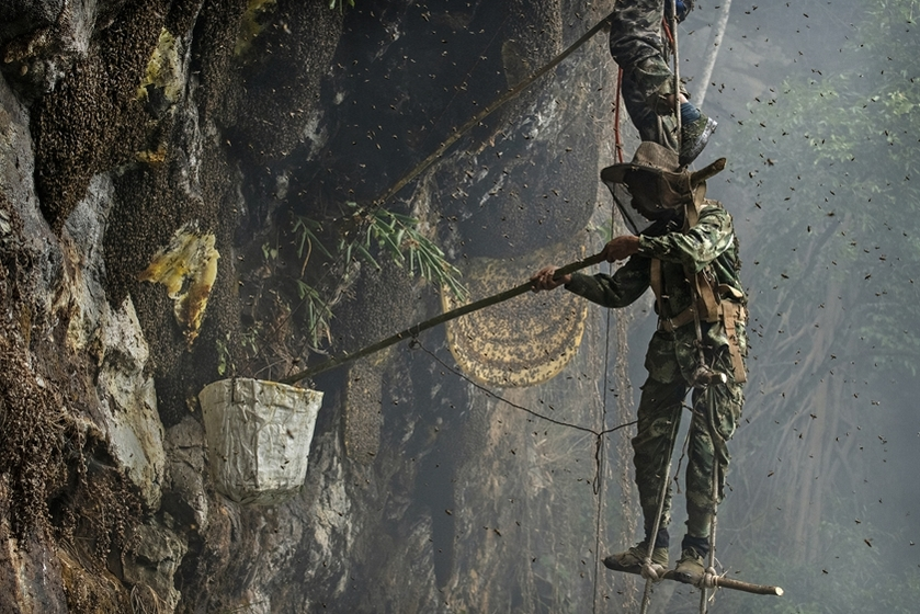 """Honey hunter"" Mi Qiaoyun stands on a makeshift ladder while collecting wild honey from cliff-side hives in Dehong prefecture, Southwest China's Yunnan province on May 11. Photo: VCG_Gallery: Dangling Honey Hunters"