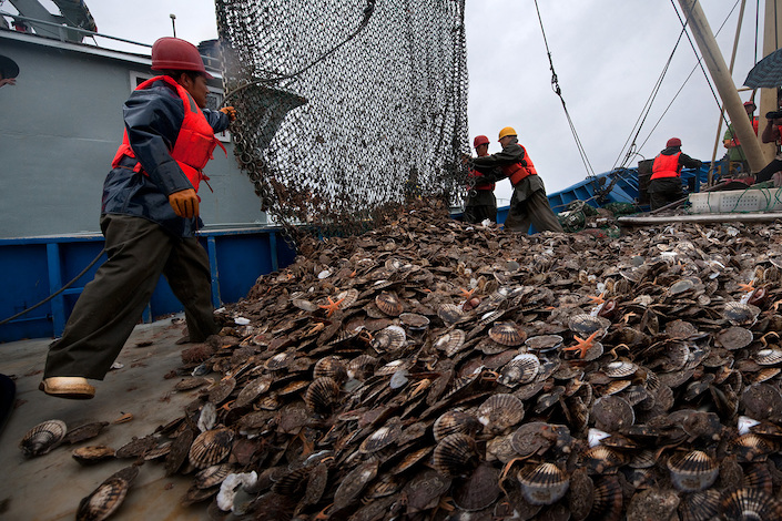 Zhangzidao has repeatedly reported dramatic changes in financials citing unexpected losses of mollusks due to natural factors. Photo: VCG